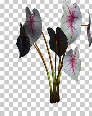 Plant Green Algae Petal Flower Leaf PNG