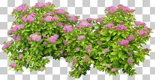 Shrub PhotoScape PNG