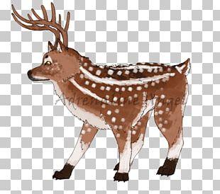 Reindeer White-tailed Deer Elk Musk Deers PNG