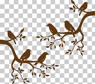Bird Branch Tree Euclidean PNG