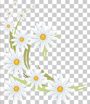 Oxeye Daisy Flower Daisy Family German Chamomile Roman Chamomile PNG