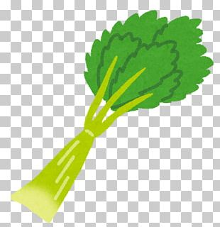 Celery Food Vegetable Dietary Fiber Beta-Carotene PNG