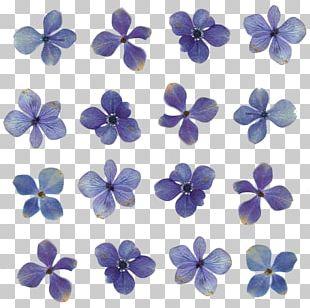 Pressed Flower Craft Light Floral Design PNG