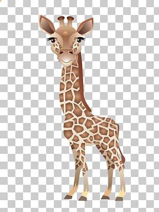 Baby Giraffe Leopard About Giraffes Northern Giraffe PNG