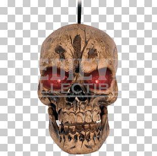Skull Head Human Skeleton Bone PNG
