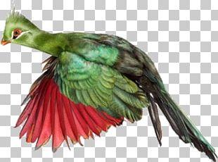 Bird Lion Beak Cuculiformes Animal PNG