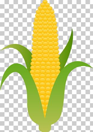 Corn On The Cob Candy Corn Maize PNG