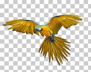 Hummingbird Flight Parrot Domestic Pigeon PNG