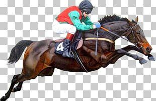 Thoroughbred Jockey Horse Racing Hunt Seat Apache Greyhound Park PNG