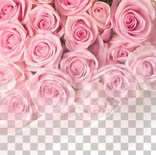 Rose Pink Flower PNG