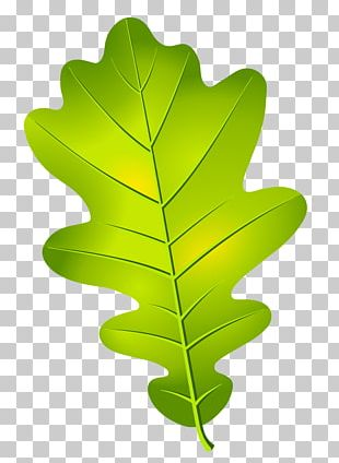 Oak Leaf Cluster Acorn PNG