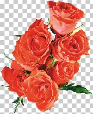 Beach Rose Flower Garden Roses If(we) PNG