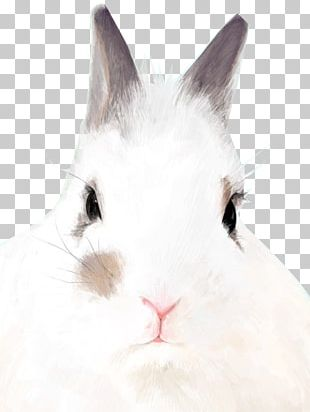 Domestic Rabbit Hare Whiskers Fur PNG