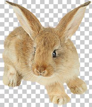 Rabbit Polyclonal Antibodies Antibody Western Blot Immunoglobulin G PNG