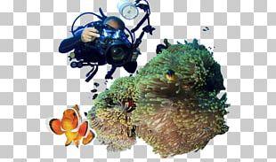 Coral Reef PNG