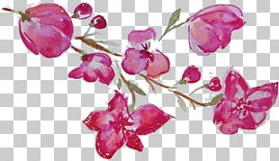 Flower Watercolor Painting Photography Floral Design PNG