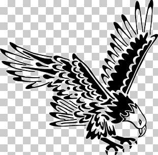 Bald Eagle Tattoo Black-and-white Hawk-eagle Eagle Feather Law PNG