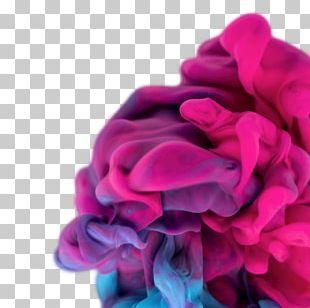 Pink Magenta Violet Purple Lilac PNG