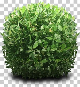 Bush Round PNG