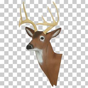White-tailed Deer Reindeer Target Archery Antler PNG