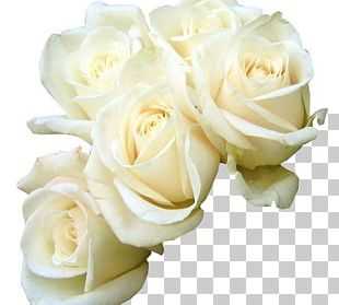 Rose White Flower Bouquet Green PNG