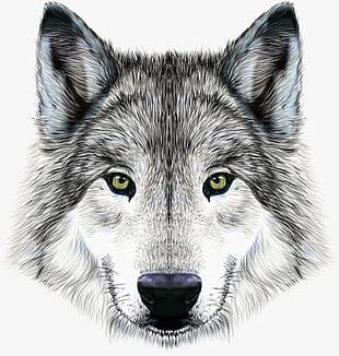 Imposing Wolf PNG