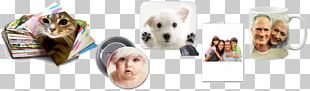 West Highland White Terrier Puppy Product Design Shoe PNG