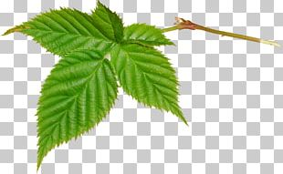 Leaf Green Icon PNG