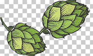 Beer Hops Common Hop Sketch PNG