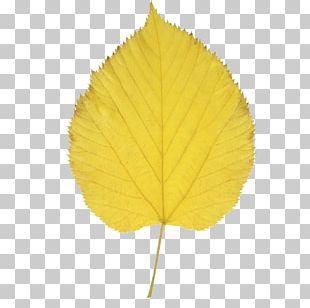 Autumn Leaf Color Aspen PNG