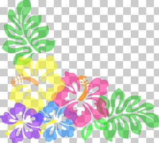 Hibiscus Schizopetalus Free Content Hawaiian Hibiscus PNG