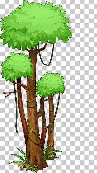 Tree Amazon Rainforest Jungle Tropical Rainforest PNG