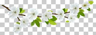 Flower Branch PNG