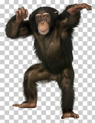 Orangutan Ape Bonobo Crab-eating Macaque Monkey PNG
