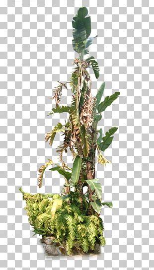 Musa Basjoo Banana Leaf Garden PNG
