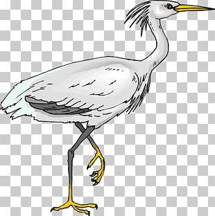 Green Heron Bird Egret PNG