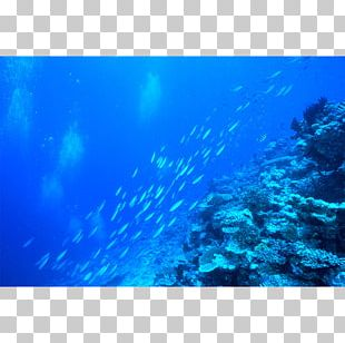 Aquarium Lighting Coral Reef Water Filter PNG