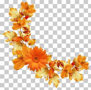 Flower Orange Paper PNG