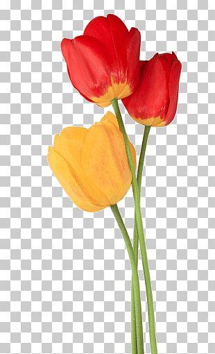Tulip Trio PNG