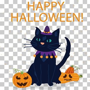 Black Cat Witch Hazel Kitten Halloween PNG