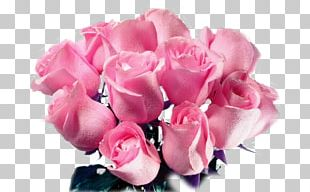 Rose Flower Bouquet Pink Cut Flowers PNG