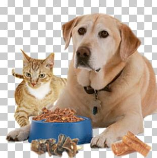 Dog Pet Sitting Cat Food Puppy PNG