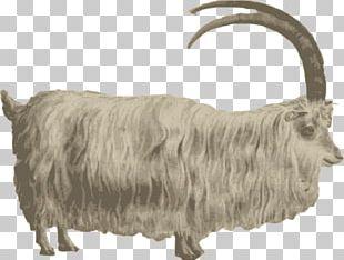 Mountain Goat Barbary Sheep PNG