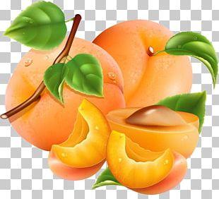 Apricot Auglis Peach Orange Vegetable PNG
