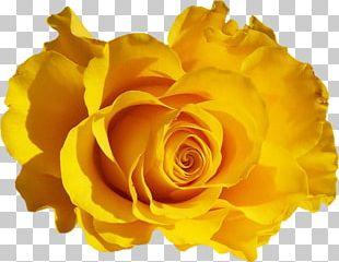 Rose Desktop Flower PNG