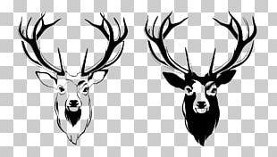 Red Deer Antler Moose PNG