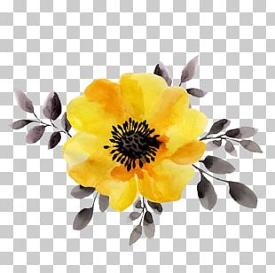 Flower Yellow Watercolor Painting Stock Illustration PNG