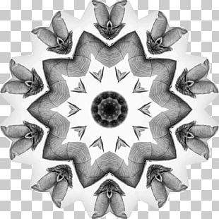 Symmetry Circle White Pattern PNG