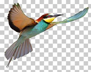 Bird Flight Bird Flight PNG