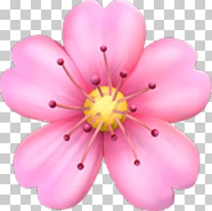 Emoji Pink Flowers Cherry Blossom Sticker PNG
